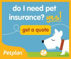 Planning for Pet Emergencies: Having Pet Insurance or Pet Savings Accounts