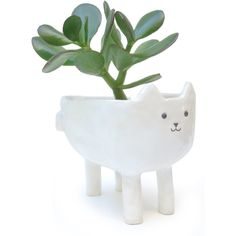 Cute Cat Planter Porcelain Succulent, Cacti or Plant Pot (225.985 COP) ❤ liked on Polyvore featuring home, home decor, succulent planters, cat home decor, porcelain planters, porcelain flower pot and porcelain plant pots