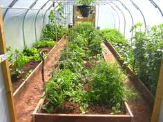 Poly tunnel, earlier this year
