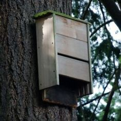 A single bat can eat up to 1,000 mosquitoes in an hour. Installing a bat home is a great way to great rid of mosquitoes naturally. Bats prefer...
