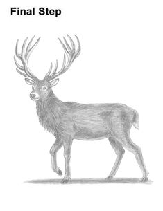 Learn how to draw a Red Deer with this how-to video and step-by-step drawing instructions. Deer Drawing Easy, Easy Drawings, Deer Tail, Easy Christmas Drawings, Easy Animals, Draw Animals, Easy Art Lessons, How To Shade, Buck Deer