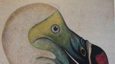 So sieht ein Dodo aus: Dasa Pahor aus München bietet diese kolorierte Federzeichnung des eigenwilligen Tieres aus dem Jahr 1860 an, für 1600 Euro.