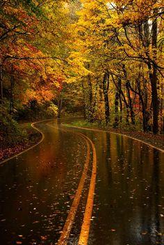 beautiful rain drenched, autumn road