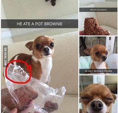 Best 22 Funny memes animals about G Funny Animal Pictures, Funny Animals, Cute Animals, Dog Pictures, Funny Cute, The Funny, Haha, Dog Eyes, Oui Oui
