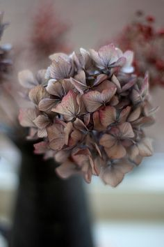 ❈ Fleurs Foncées ❈ dark art photography flowers & botanical prints - hydrangea--Very lovely! I'm also rather fond of this puce color. So many colors to choose! Hortensia Hydrangea, Blue Hydrangea, Mauve, Lilac, Purple, Dried Flowers, Beautiful Flowers, Flowers Nature, Flower Art