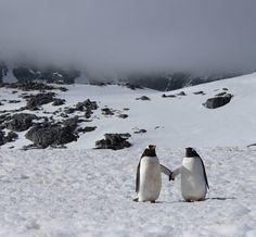 #FriFotos: Meet the #RomeoJuliet of #Antarctica! #love #penguins #bae pic.twitter.com/KIw1VGNYYa