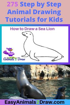 Learn how to draw an amazing Sea Lion with this easy and inspirational step-by-step drawing tutorial for kids of all ages! Start by drawing the head of the Sea Lion. Draw a curved line in graphite pencil. Fish Drawings, Horse Drawings, Animal Drawings, Dinosaur Drawing, Cat Drawing, Drawing Tips, Easy Animals, Draw Animals, American Animals