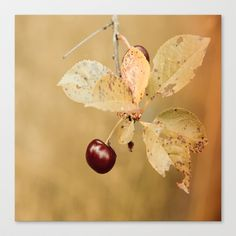 Autumn Cherry image Stretched Canvas by Tanja Riedel - $85.00