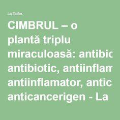 CIMBRUL – o plantă triplu miraculoasă: antibiotic, antiinflamator, anticancerigen - La Taifas | La Taifas Alter, Good To Know, Remedies, Health Fitness, Healthy Recipes, Healthy Food, Nature, Pandora, Medicine