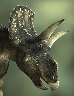 Diceratops in Animals and Creatures, Animals,  3D Models by Daz 3D