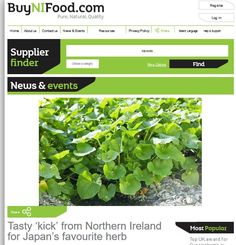 Wasabi News covers all activities related to the production of wasabi in Northern Ireland. Northern Ireland, Herbs, Japan, Plants, Northern Ireland County, Herb, Plant, Japanese, Planets