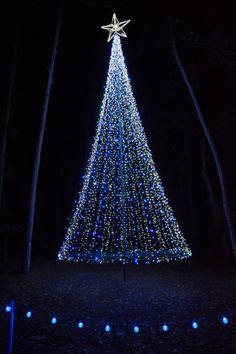 christmas blues chase em away at holiday lights - Garvan Gardens Christmas Lights