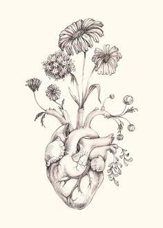 trendy ideas for illustration art heart tattoo ideas Coeur Tattoo, Tatoo Heart, Heart Flower Tattoo, Human Heart Tattoo, Human Heart Drawing, Anatomy Art, Heart Anatomy Drawing, Heart Art, Future Tattoos