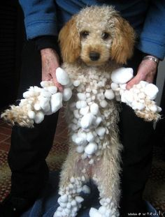 So ?    I Like playing in   snow.....                                               How cute is this...