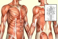 Click Here to Download Human Anatomy and Physiology Course by Dr James Ross