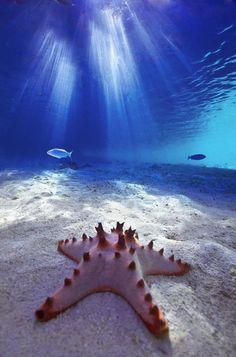 fond marin, étoile de mer rose au fond marin
