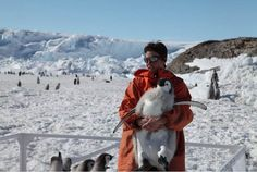 Emperor Penguins Slipping Away-mommy, i want one of those!