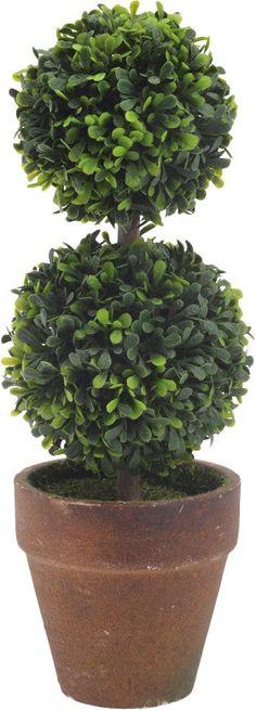 Circular Boxwood Topiary in Pot