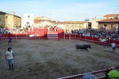 Santacara: Vacas de Adrián Domínguez (5) Cows