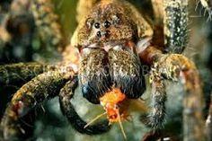 spider feeding - Buscar con Google