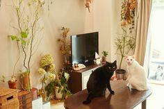 猫たちの細かな表情を刺繍で表現する刺繍作家・小菅くみさんは、黒猫のおはぎさんと白猫のおもちさんの2匹の猫たちと暮らしています。幼い頃からたくさんの動物に囲まれて育ってきたというくみさん。2匹暮らしになってからより愛おしくなったという猫たちについて伺いました。
