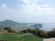 A potato field and the Ariake Sea.(Minami-Shimabara,Japan)
