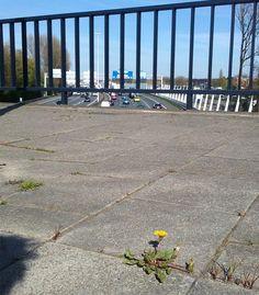 A20 Noorderbrug  foto: Heleen van Zantvoort Rotterdam, Sidewalk, Side Walkway, Walkway, Walkways, Pavement