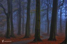 Autumns Curve by Lars van de Goor