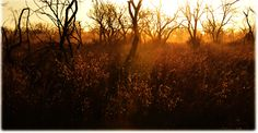 The Golden Hour Golden Hour, South Africa, Wildlife, Celestial, Sunset, Landscape, Outdoor, Outdoors, Sunsets