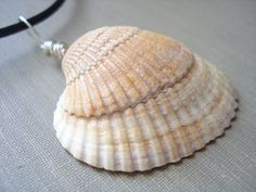 Tan Seashell Necklace  Natural Seashell Jewelry  by SoapSudAlley