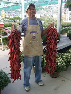 Want fresh chile ristras? We got big ones.