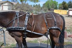 Horse harnes parts identified Horse And Buggy, My Horse, Breyer Horses, Draft Horses, Horse Cart, Horse Harness, Horse Drawn Wagon, Types Of Horses, Equestrian Outfits