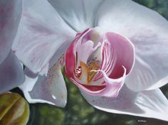 Moth Orchid painting photorealism in oils floral artist by delmus,
