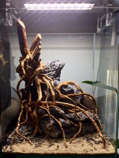 Top 11 Secrets to a Successful Home Aquarium - Life ideas Aquascaping, Aquarium Aquascape, Aquarium Setup, Aquariums, Aquarium Nano, Fish Aquarium Decorations, Aquarium Terrarium, Home Aquarium, Aquarium Design