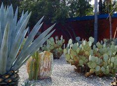 Topanga Canyon cactus garden- feet from my house Succulent Rock Garden, Dry Garden, Succulents Garden, Succulent Ideas, Drought Resistant Plants, Drought Tolerant Landscape, Topanga Canyon, California Garden, Landscaping With Rocks