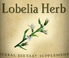 LOBELIA HERB All Natural Herbal Tincture Nutritional Dietary Supplement Herb by NaturalHopeHerbals on Etsy