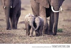 Sweet baby elephants-there is just something about elephants that speaks to me...