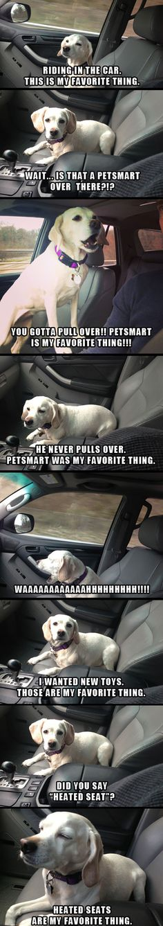 Funny pictures about A Dog's Favorite Thing. Oh, and cool pics about A Dog's Favorite Thing. Also, A Dog's Favorite Thing photos. Funny Animal Memes, Dog Memes, Cute Funny Animals, Funny Animal Pictures, Funny Cute, Funny Dogs, Hilarious, Funny Humor, Super Funny