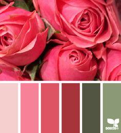 rose palette