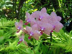 A waterfall in the garden - Picture of Hawaii Tropical Botanical ...