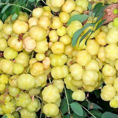 This is called Gooseberry in St. Lucia
