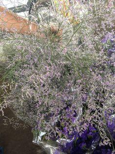 Light Flora 02 (invermo)