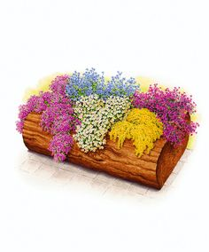 Soapworts. onizing varieties. The collection comprises of low-growing, hardy, clump-forming varieties. A planter, large flower pot or window-box filled...