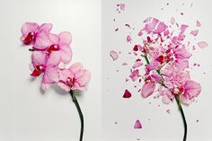 Jon Shireman has a cool project titled Broken Flowers that features photographs of flowers that were shattered. How do you shatter flowers, you ask? By freezing them with liquid nitrogen! Still Life Photography, Art Photography, Stunning Photography, Foto Still, Liquid Nitrogen, Natural Forms, Flower Photos, Flower Images, Fresh Flowers