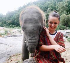 Thailand Travel, Elephant, About Me Blog, Animals, Elephants, Temple, Animais, Animales, Animaux
