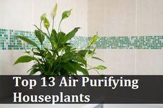 Top 13 Air Purifying Houseplants