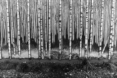 from Coast Weekend Brookings Oregon, Discovery, Coastal, Artist, Modern, Trendy Tree, Artists