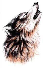 Les 75 Meilleures Images Du Tableau Loup Sur Pinterest Wolf