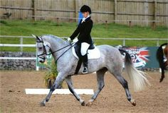 Favara Dynasty - Fantastic allrounder for sale http://www.equineclassifieds.co.uk/Horse/fantastic-allrounder-for-sale-listing-418.aspx#.UqGeVCeAUfQ