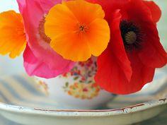 prettylittleflower:    popPopPop (by Majlee)
